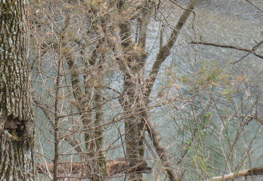 2164 Mill Dam Road Marshfield, MO 65706 - Photo 5