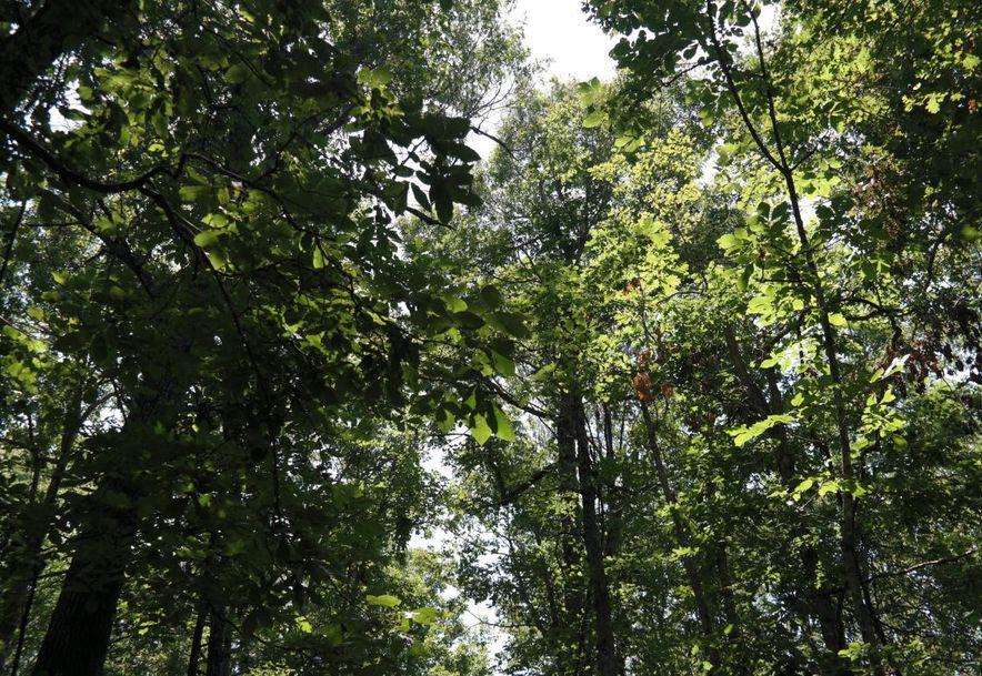 Tbd Lawrence 1240 Aurora, MO 65605 - Photo 21