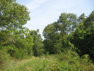 Tbd T1-3 Zz-464 Birch Tree, MO 65438 - Image