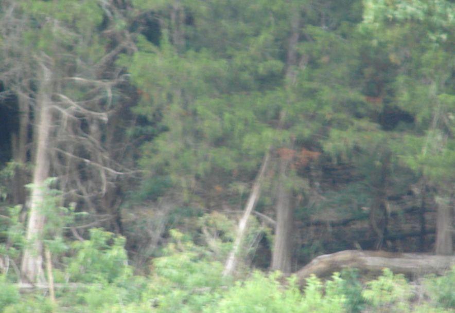 Tbd Y-40 Galena, MO 65656 - Photo 9