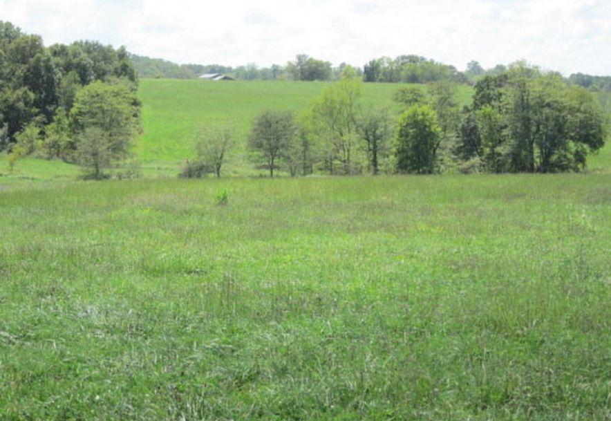 5751 State Highway E Hartville, MO 65667 - Photo 74