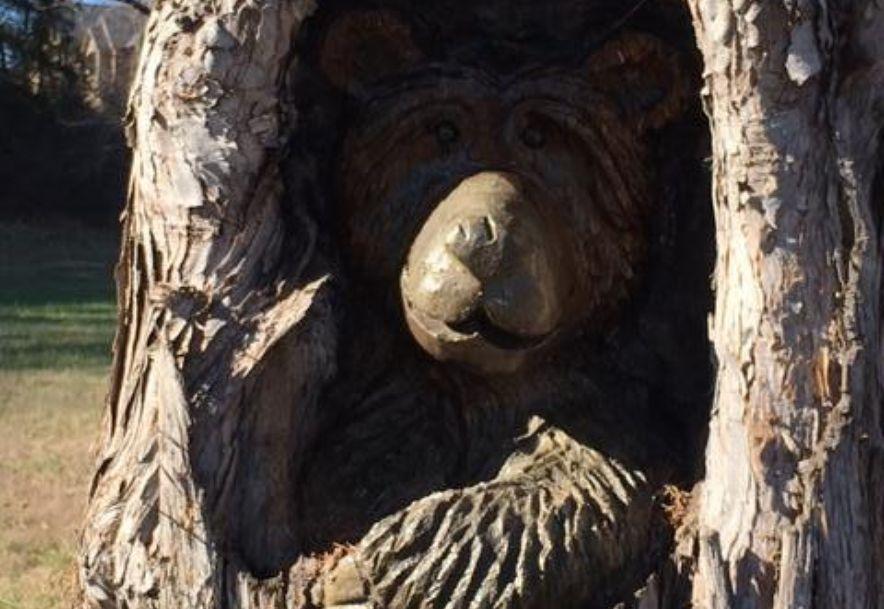 902 Forest View Saddlebrooke, MO 65630 - Photo 41