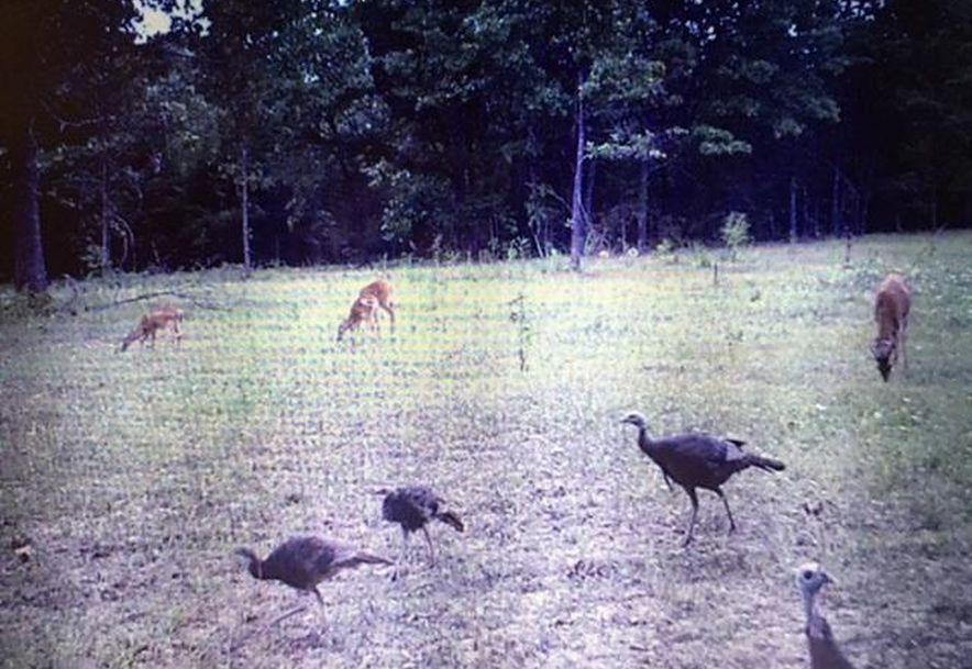 260 Peck Hill Road Rogersville, MO 65742 - Photo 41