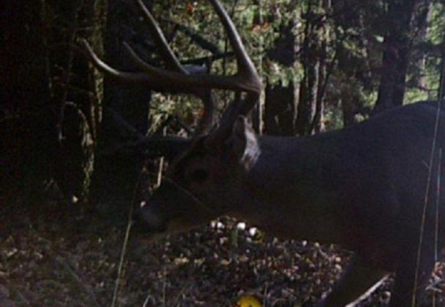 260 Peck Hill Road Rogersville, MO 65742 - Photo 70
