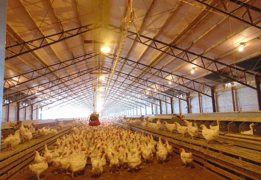 10842 Farm Road 1040 Purdy, MO 65734 - Photo 13