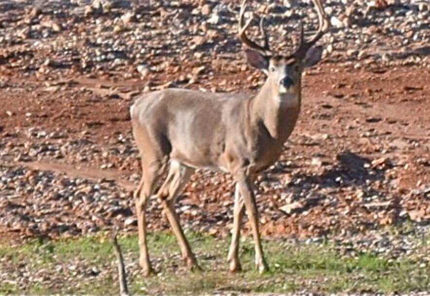 14736 Co Rd 8430 West Plains, MO 65775 - Photo 70