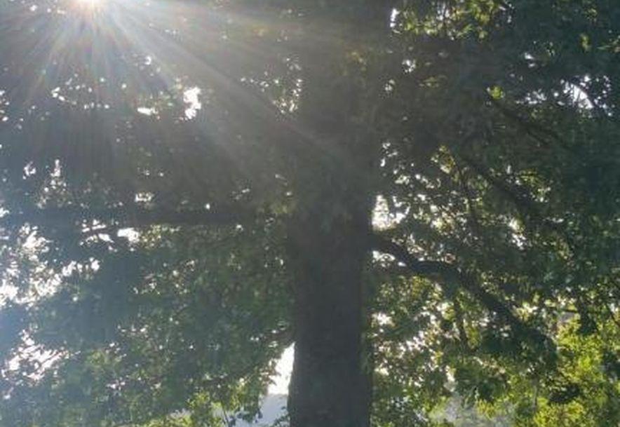 Rt 2 Box 2853 Seymour, MO 65746 - Photo 72