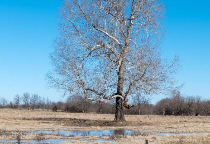 606 West Boone Street Ash Grove, MO 65604 - Photo 42