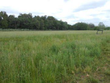 000 Farm Road  2172 Cassville, MO 65625 - Image