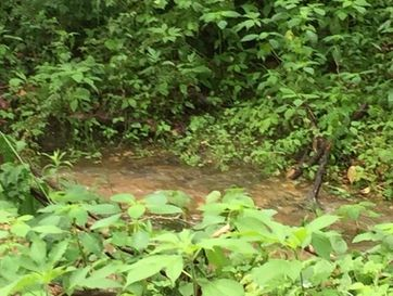 Tract 9 Spring Creek Road Seymour, MO 65746 - Image 1