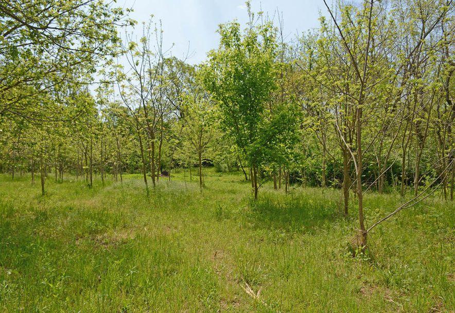 6105 South Farm Road 193 Rogersville, MO 65742 - Photo 10