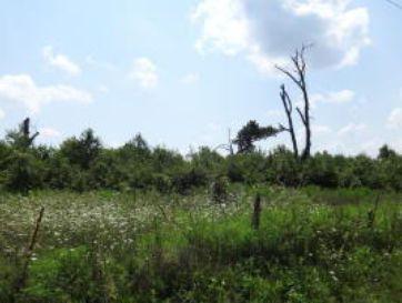 1529 Jaguar Road Joplin, MO 64804 - Image 1