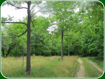 Tbd Walnut Road Grovespring, MO 65662 - Image 1