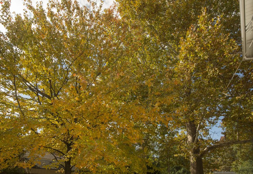 1039 South Weller Avenue Springfield, MO 65804 - Photo 45