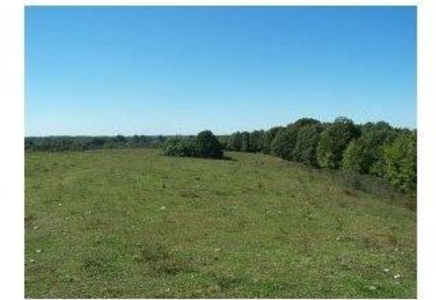 2003 Keystone Reeds Spring, MO 65737 - Photo 7