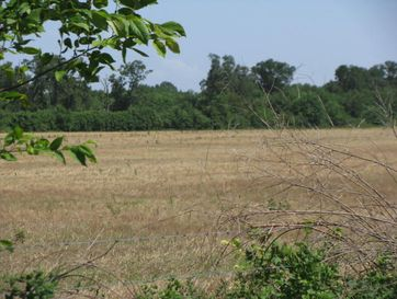 Tbd Cherry Rd Wentworth, MO 64873 - Image 1