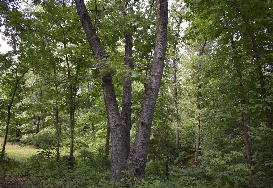 2496 State Hwy O Seymour, MO 65746 - Photo 54