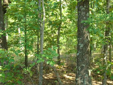 1397 State Route 17 N Mountain View, MO 65548 - Image 1