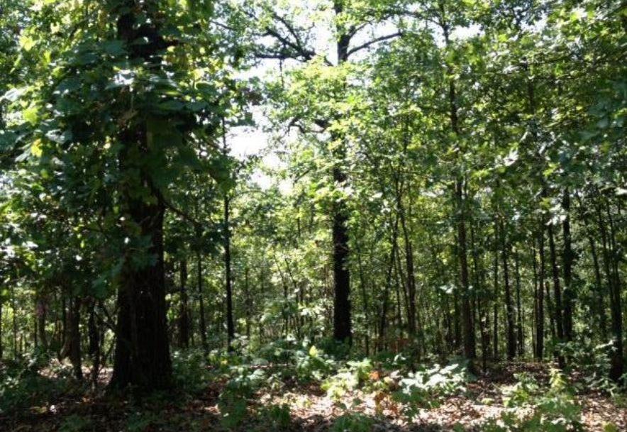 0 Ridgedale Road Highlandville, MO 65669 - Photo 2