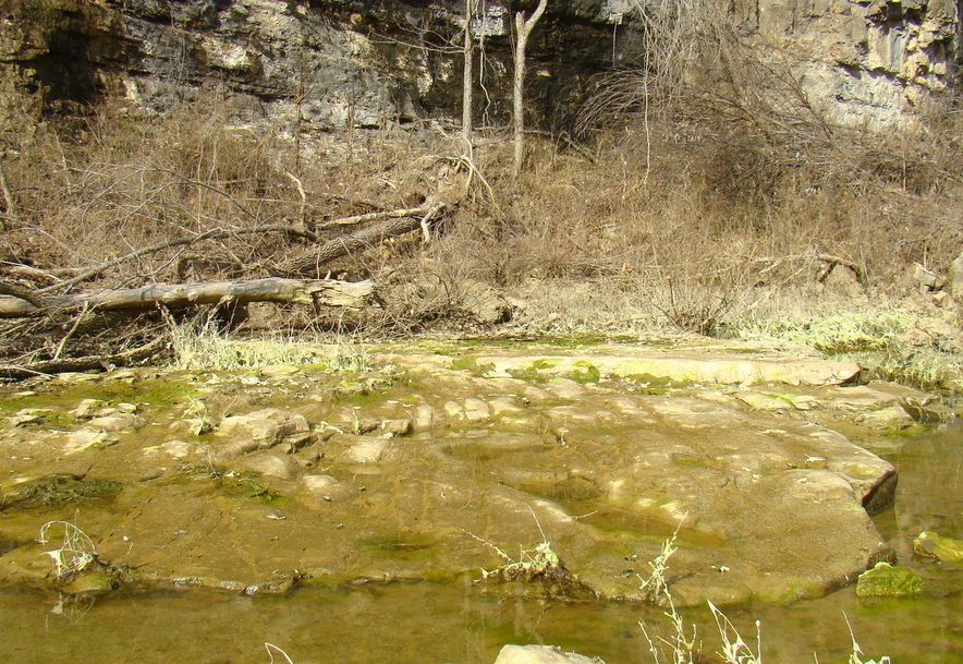 7923 County Road 5150 West Plains, MO 65775 - Photo 20