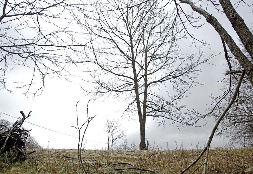 314 Gladiola Lane Clever, MO 65631 - Photo 29