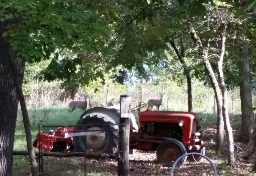 14660 Farm Road  2147 Cassville, MO 65625 - Photo 12