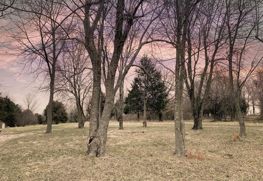 1351 West Mount Vernon Street Nixa, MO 65714 - Photo 4