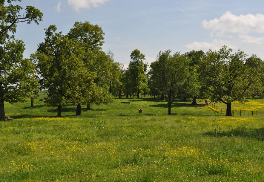 11196 Lawrence 1165 Mt Vernon, MO 65712 - Photo 14