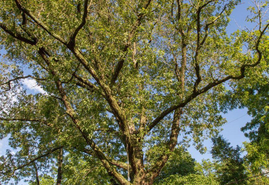 1256 Hayden Court Springfield, MO 65804 - Photo 54