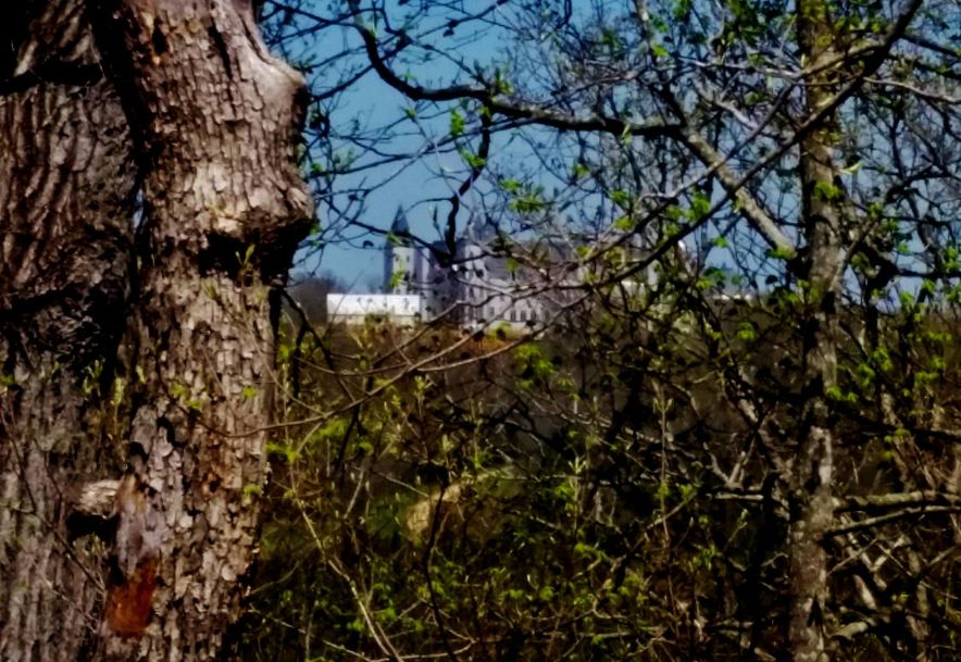 Tbd 65 Hwy Highlandville, MO 65669 - Photo 9