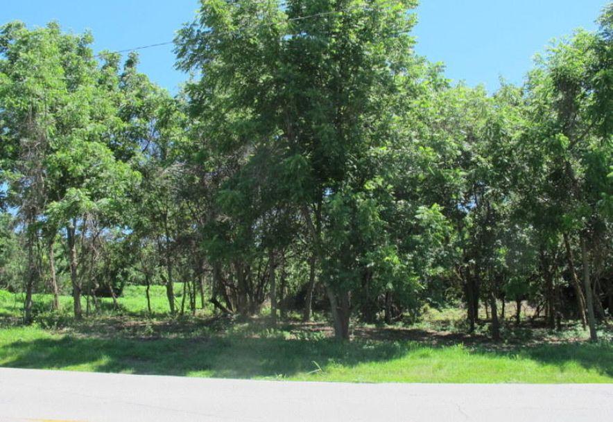 Tbd Highway Yy Norwood, MO 65717 - Photo 11