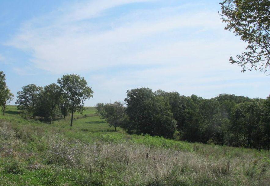 Tbd Highway Yy Norwood, MO 65717 - Photo 21