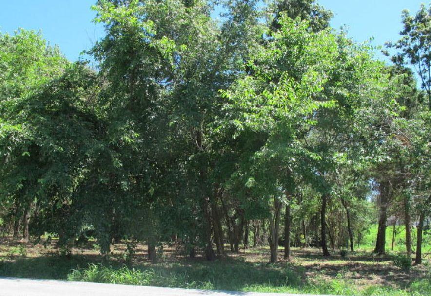 Tbd Highway Yy Norwood, MO 65717 - Photo 9