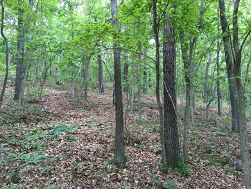 Lot # 84 North Woods Road Rogersville, MO 65742 - Image 1