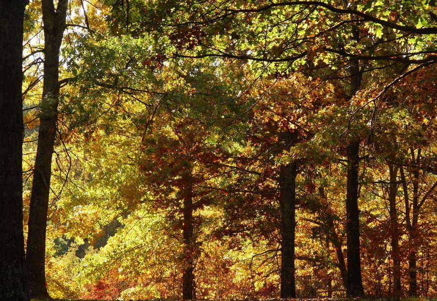 255 Shady Ridge Lane Fordland, MO 65652 - Photo 51