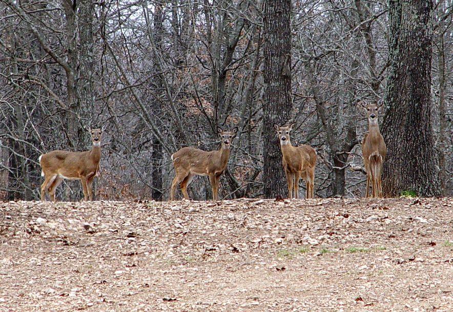 255 Shady Ridge Lane Fordland, MO 65652 - Photo 54