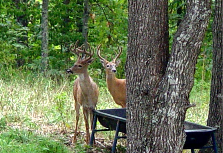 255 Shady Ridge Lane Fordland, MO 65652 - Photo 55