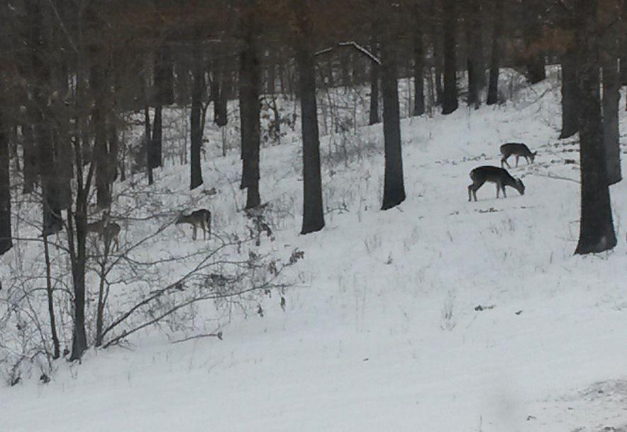 255 Shady Ridge Lane Fordland, MO 65652 - Photo 57