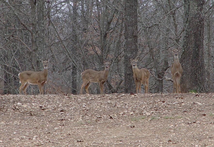 255 Shady Ridge Lane Fordland, MO 65652 - Photo 58