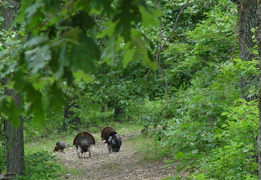 255 Shady Ridge Lane Fordland, MO 65652 - Photo 64