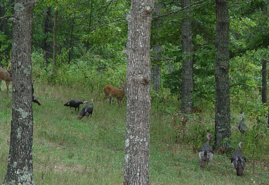 255 Shady Ridge Lane Fordland, MO 65652 - Photo 65