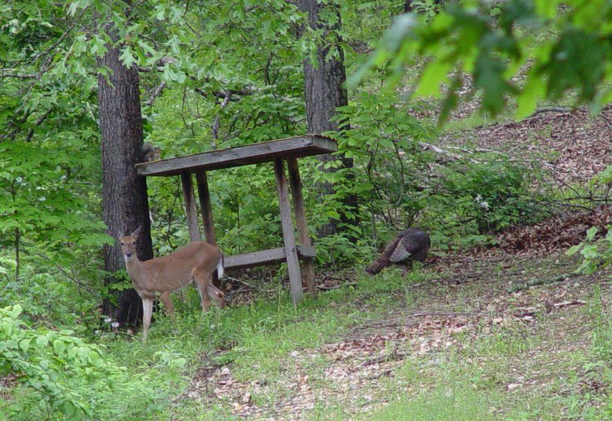 255 Shady Ridge Lane Fordland, MO 65652 - Photo 67