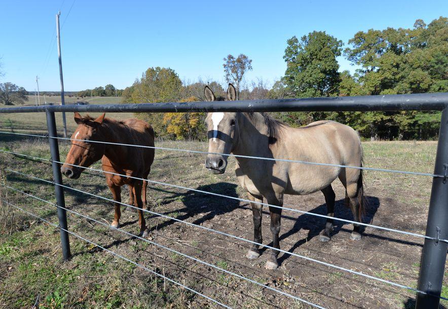 14075 Bee Creek Road Omaha, AR 72662 - Photo 36