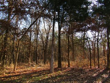 7118 East County Line Road Rogersville, MO 65742 - Image 1