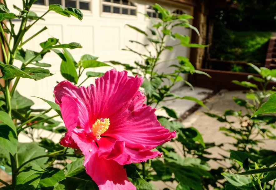 101 Briar Oaks Lane Branson West, MO 65737 - Photo 64