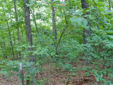 Lot 1 Misty Mountain Drive Bruner, MO 65620 - Image 1