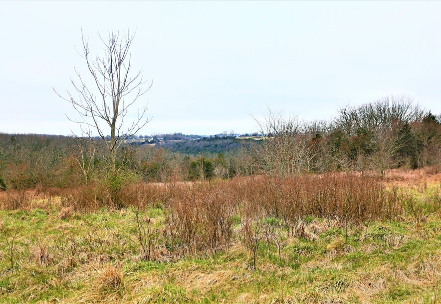 000 Coon Creek Road Hollister, MO 65672 - Photo 13
