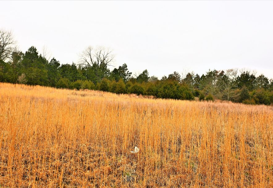 000 Coon Creek Road Hollister, MO 65672 - Photo 47