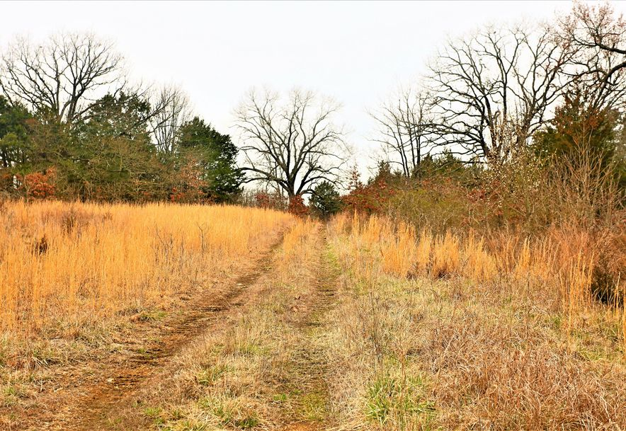 000 Coon Creek Road Hollister, MO 65672 - Photo 42