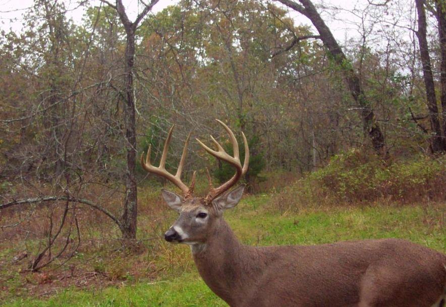 596 Little Creek Road Mountain Grove, MO 65711 - Photo 48